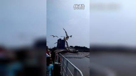 张昊霖和妈妈喂海鸥111