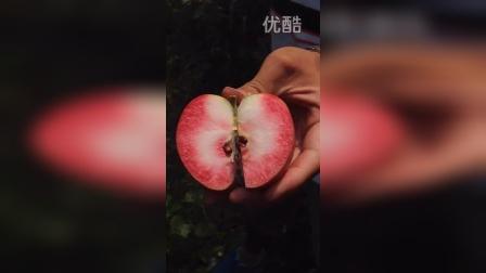 瑞士红色之爱红肉苹果D94