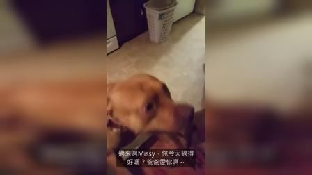 狗狗超兴奋主人回家,但当主人问到是谁把裤子咬烂时...