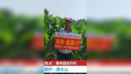 泰来县表现最好 、抗旱能力最强的玉米种子——龙高L2
