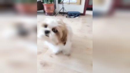 可爱的狗狗
