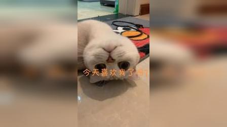 当可爱小猫卖起萌来,这谁顶得住啊
