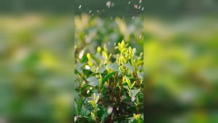 南娜茶树手工精油皂温和对抗痘痘肌