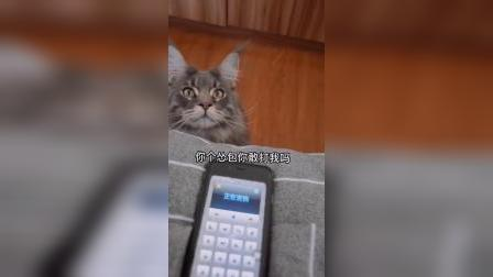 猫:你这个要求挺别致呀,朕就满足你一回吧