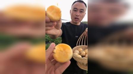 """云南石林人参果低糖水果,被称为""""抗癌之王""""更适合三高人群,孕妇和小孩。"""
