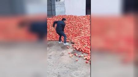 辛辛苦苦一年种的苹果,收获看不到希望,天灾没果子卖
