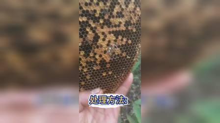 🐝  今天跟大家分享一个小视频 💐 还有很多新蜂友问我怎么处理视频上的这种问题。 🆘 这类问题一般出现在度夏,越冬前,蜜源不足,蜂弱,病虫害。
