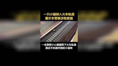 一只小猫掉入火车轨道,暖心的警察叔叔涉险爬下站台,把小猫抱回地面。