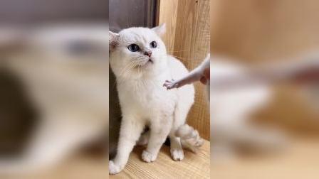 猫爸爸凶它亲儿子,猫妈妈瞬间怒了,上去就是一顿教训
