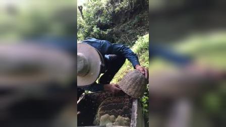 秦岭土蜂蜜的作用与功效