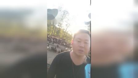 情火 演唱冉巍富 易县绿壳鸡蛋养殖场