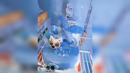 宠物烘培培训,犬猫纯天然无添加生日蛋糕吸引高端客户 提升宠物店服务档次