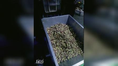 白桑葚入酒罐视频