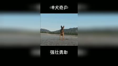 神犬奇兵:人可能会让你失望,但狗从来不会!
