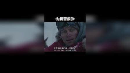 雪橇犬极地求生,一部催人泪的影片!