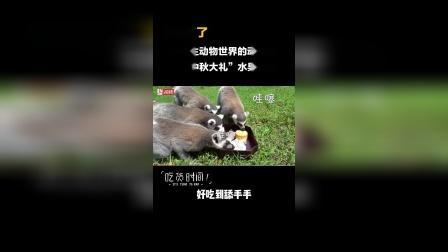 """杭州野生动物世界的动物们收到中秋大礼""""水果月饼"""",确认过眼神,是对的月饼。"""