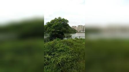 花都秀全水库,江同福风水:右水左倒漂亮的明堂