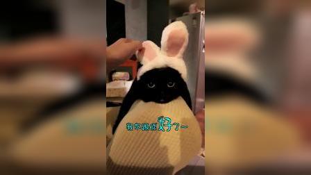 谁说黑猫没有颜值,那是你们不懂欣赏好吗?
