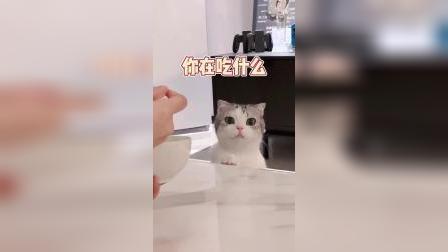 这么可爱的猫咪,我要说我一天能亲死一百只,你们信吗