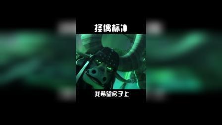 """功夫熊猫3:什么叫做""""凤凰男""""?月入1800要房又要车,找媳妇凭本事单身"""