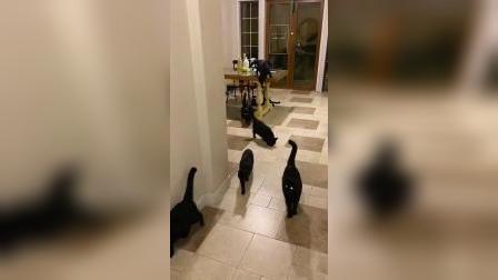 养这么多黑猫不吉利?有的人就是咸吃萝卜淡操心