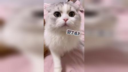 各位网友,你们有被一只猫咪保护过吗?