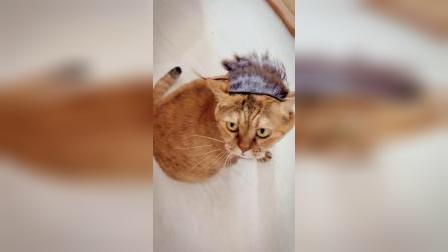 灵魂摇滚肥橘猫