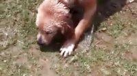 被水呛死的狗